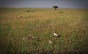 025 Национальные парки Африки- зоопарк наоборот -- Все как у зверей в Кении