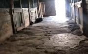 Дневник Депутата | Лошади МВД умирают от голода на Саратовском ипподроме! Полиция решила скрыть это от людей!