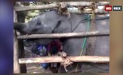 Порабощенные гиганты. Фильм о слонах / Giant Slaves - A film about Elephants - Фильм