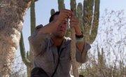 Выжить любой ценой - Пустыня Баха (Калифорнийский полуостров, Мексика)