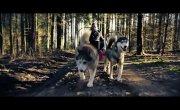 Faszination Zughundesport - Sacco Dog Cart