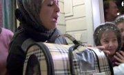 История со счастливым концом кот вернулся к хозяевам-беженцам