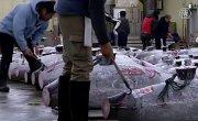 Голубого тунца продали за $615 000 на аукционе в Токио (новости)
