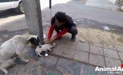 Собака-мать просит помощи человека