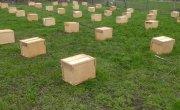 ФСБ задержала два миллиона пчел-нелегалов