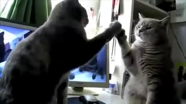 Коты ладушки в играют