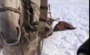 Конь ест рыбу )))