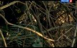 Самые опасные животные России. Леопардовый кот (Кошкин дом). Рейтинг Т. Баженова. Моя планета. 14.11.2011.