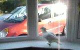 Веселый попугай 50 cent всех качает))))