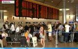 Мышиный спецназ. Специально обученные мыши стерегут покой пассажиров в главном аэропорту Израиля.