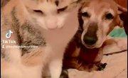 Кошка Мура приемная дочь собаки