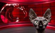 """Это просто гремучая смесь!  ;) Татьяна Монтян в """"гостях"""" у Кота Костяна."""