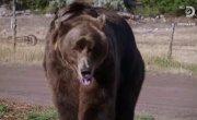 Человек против медведя / Man vs Bear - 1 сезон, 8 серия
