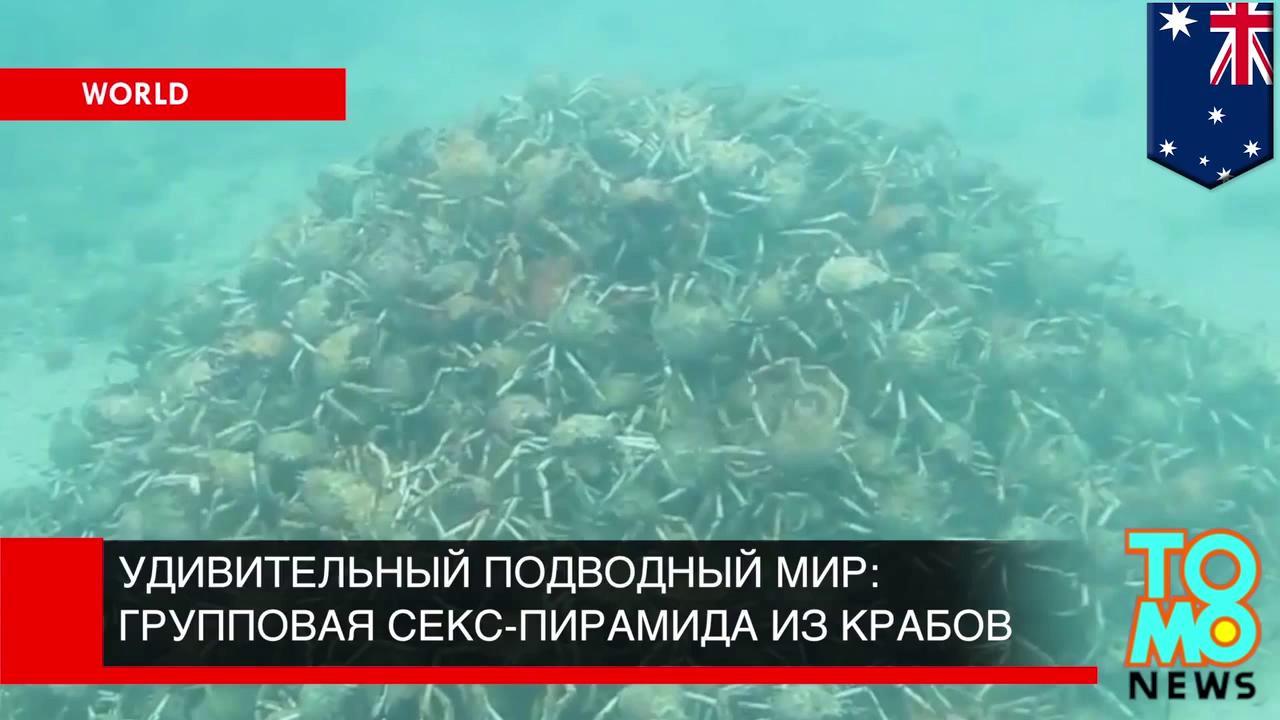 Секс в подводном мире