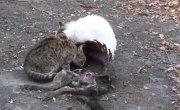 если кошатник умрёт в своей квартире, а котик проголодается, то с ним будет тоже самое
