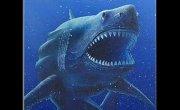megalodon shark!!