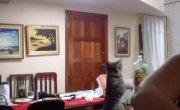 Кошка учит хозяйку мыть посуду
