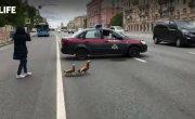 Росгвардейцы перекрыли оживлённую магистраль, позволив утиному семейству перейти дорогу