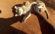 GoPro HD- Baby Lion Hug and Cuddles