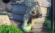Кот вегетарианца