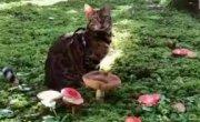 Мяш пошел по грибы