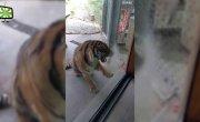 Атаки диких животных в зоопарках