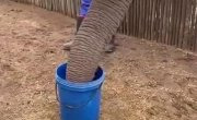 Как пьют слоны