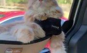 Кот кайфует в гамаке