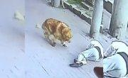 Пожилого жителя Китая едва не убило кошкой.